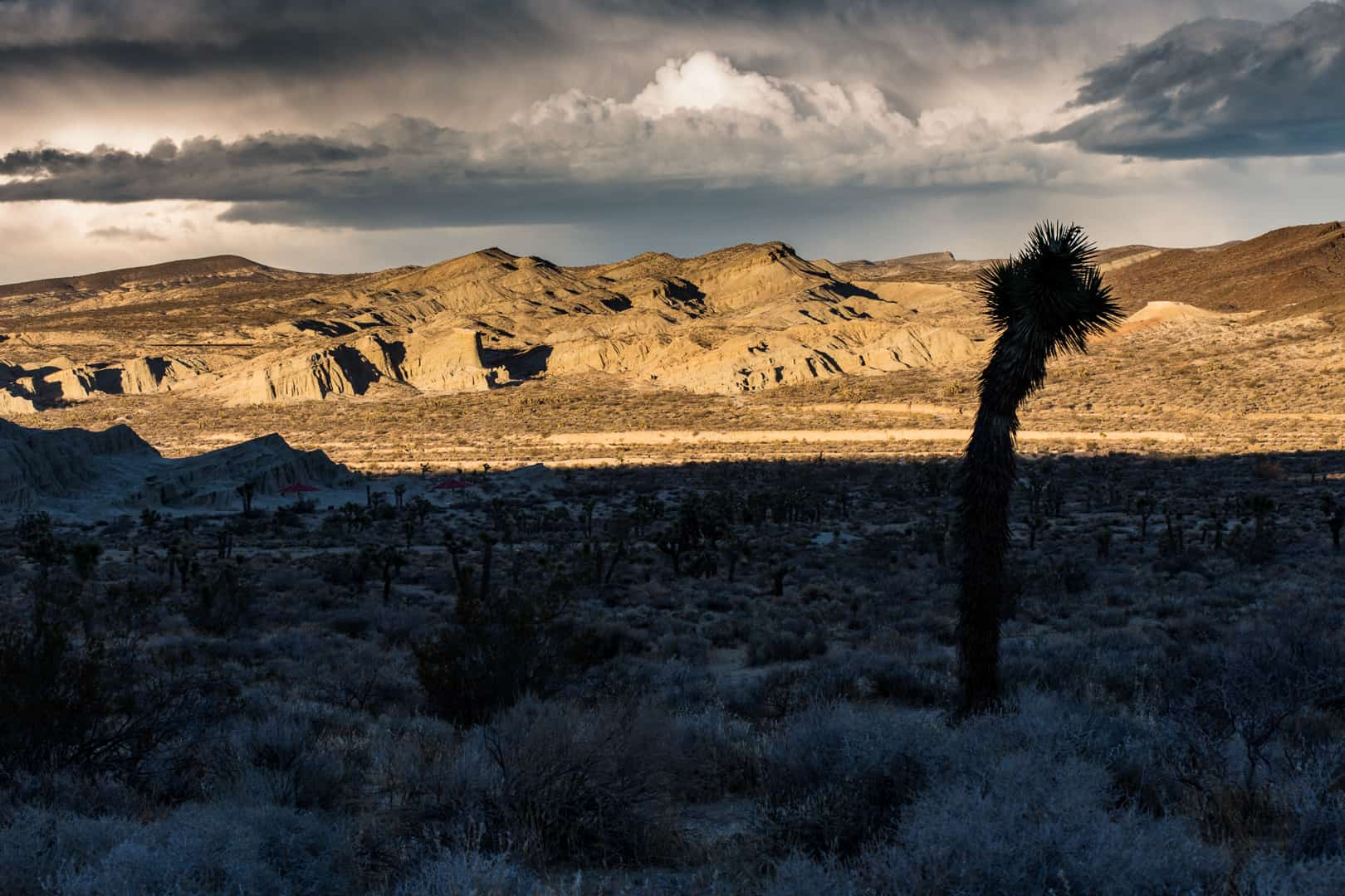 Yucca & Sunset, Red Rock Canyon State Park, December 2015